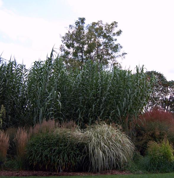 Grasses at RBG