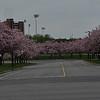 7  Street Scenes (Spring UofG) Lenore_edited-1