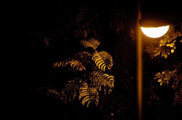 08: Lamp and Leaves A quiet night in Bombay 13 February 2011 NIKON D90; 18-200 mm f/3.5-5.6; Pattern; 0.6 sec at f/6.3; ISO-200;