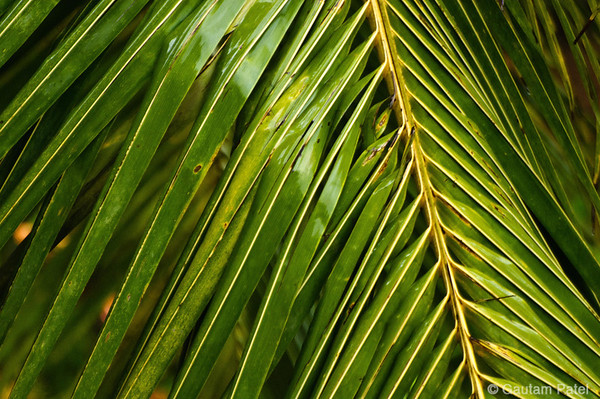 02: Raindance Palm fronds