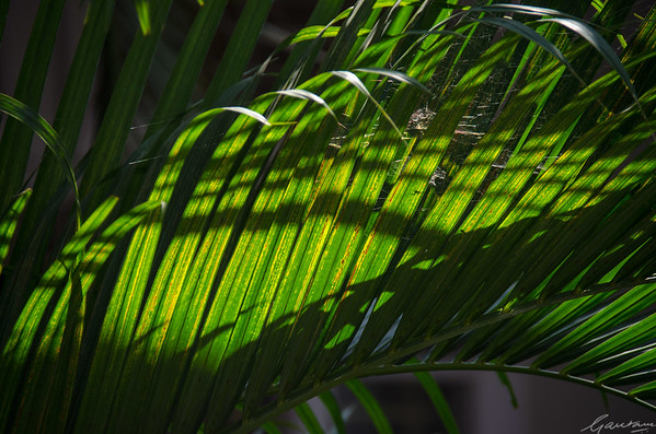 Green, gold, light, shadow
