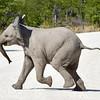 Baby Elephant - Etosha, Namibia