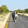 Black Rhinoceros - Etosha National Park, Namibia