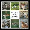 Who said Ducks Don't Kiss? - Part 3
