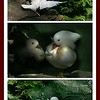 """White Mandarins: """"Fly away with me!"""""""