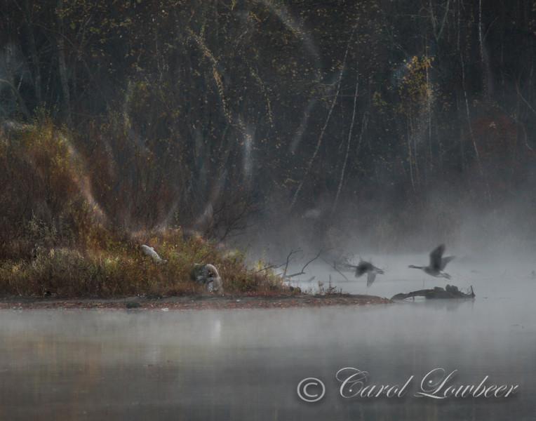 Hanover Pond at early dawn