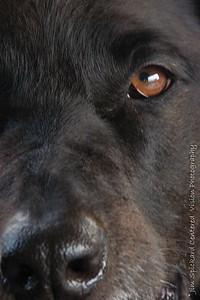 Homedog