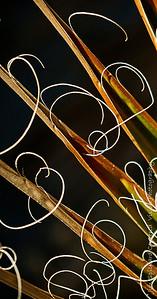 Yucca Threads