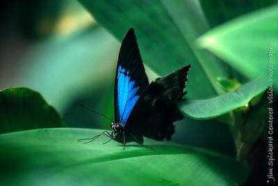 Blue Ulysses