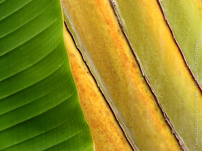 Banana Leaf and Palm Frond
