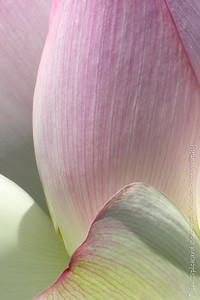 Closed Lotus