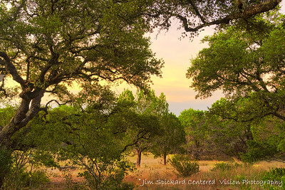 Early Morning Light with Oaks