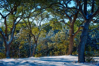 Snowy Trees in Morning Light