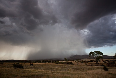 NM-2011-237: , Hidalgo County, NM, USA