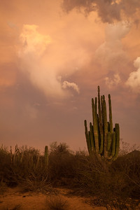 SON-2012-130: Las Conchas, Mpo. Hermosillo, Sonora, Mexico