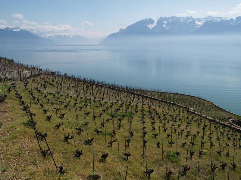 Ostern 09 - per Velo rund um den Genfersee und via Bonneville nach Annecy / Aufnahmeort  Chexbres (483.5 m), Chexbres, Schweiz /  ©  Rob Tani