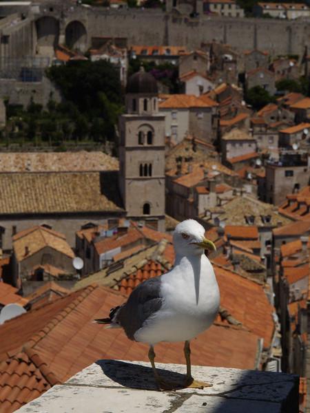 2006/07/05 12:11:23 /  ©RobAng /  Croatia - Kroatien / Dubrovnik