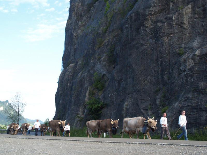 ©RobAng 2009/05/23 07:04:37, Euthal, 894 m // Velotour  Auffahrt 09 - Türlersee-Aegerisee-Raten-Sihlsee-Sattelegg-Wäggitalersee