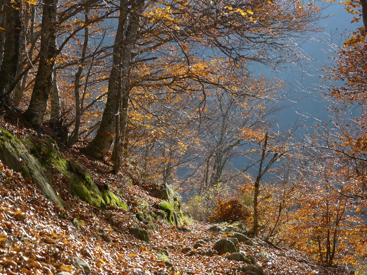 @RobAng 2012,  Rasa, Rasa, Cantone Ticino, CHE, Schweiz, 1010 m ü/M, 15.11.2012 12:55:35