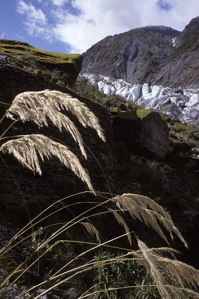 © RobAng 1989, New Zealand by bicycle, Franz-Josef Glacier, 15.3.89