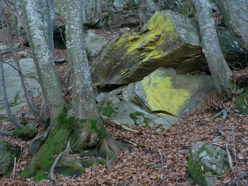 @RobAng 2012,  Alpe di Naccio, Brissago, Cantone Ticino, CHE, Schweiz, 1328 m ü/M, 15.11.2012 13:57:25