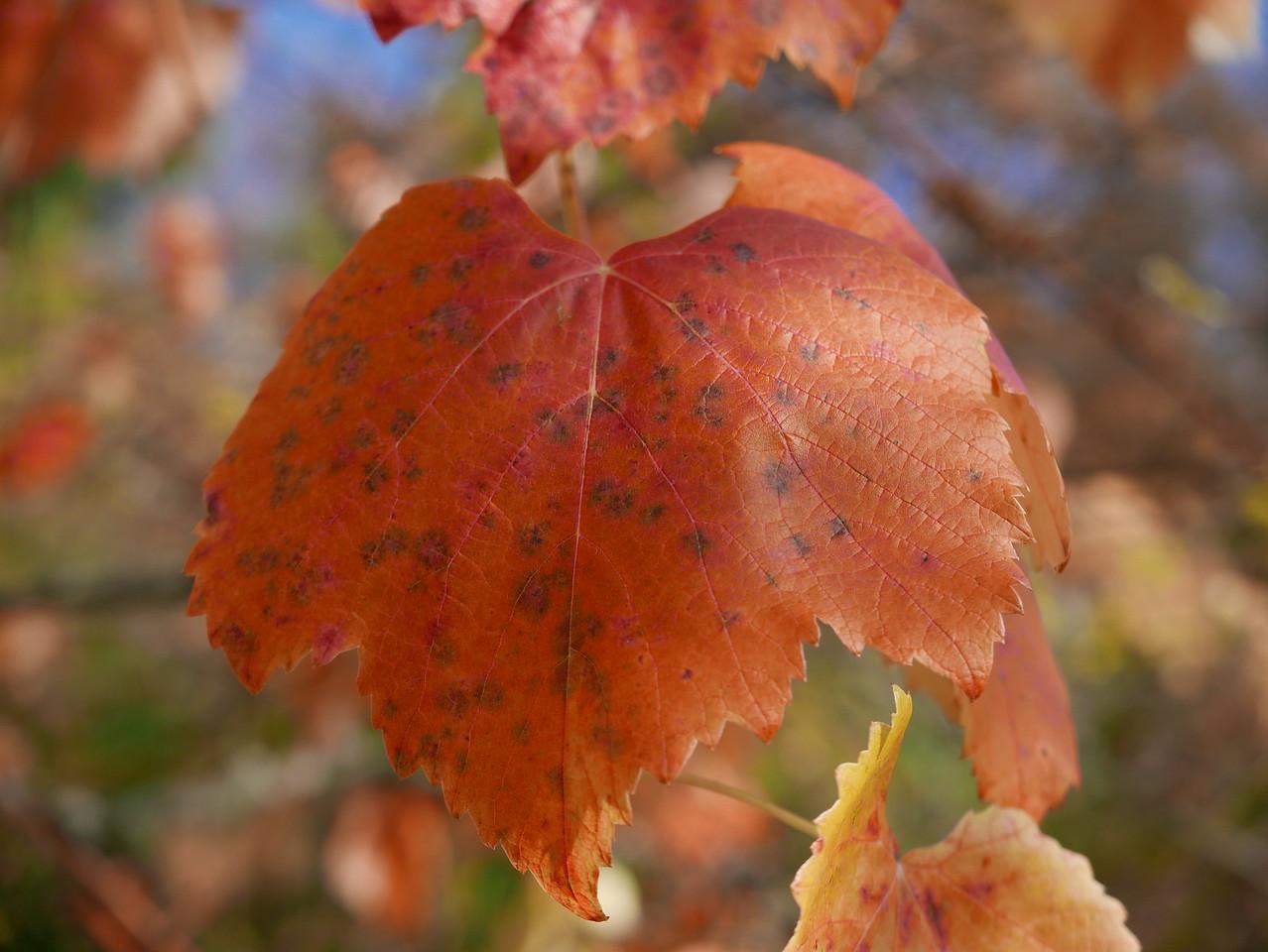 @RobAngVermerk Nov 2015 / Winterthur Herbst 15: Lindberg - Teuchelweiher