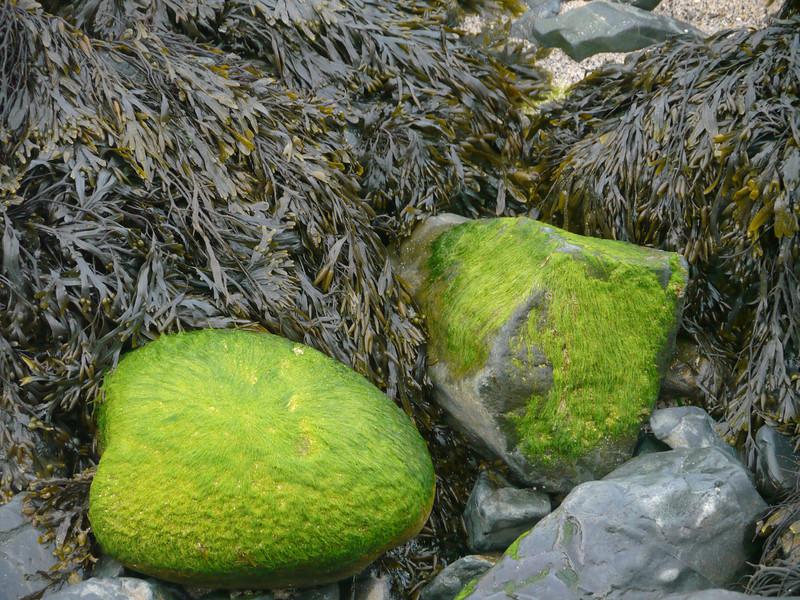© RobAng 2011, Velotour GB (Dorset-Devon-Cornwall), Cornwall, St Ives, St. Ives, 7 m