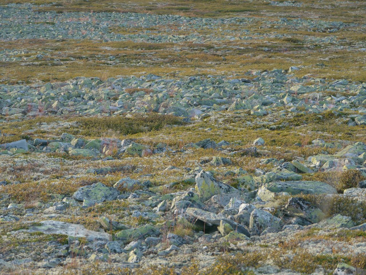 @RobAng 2012 / Brettninga, Friies-Weg von Ringebu nach Atna, Oppland, NOR, Norwegen, 1187 m ü/M, 03.09.2012 19:06:01
