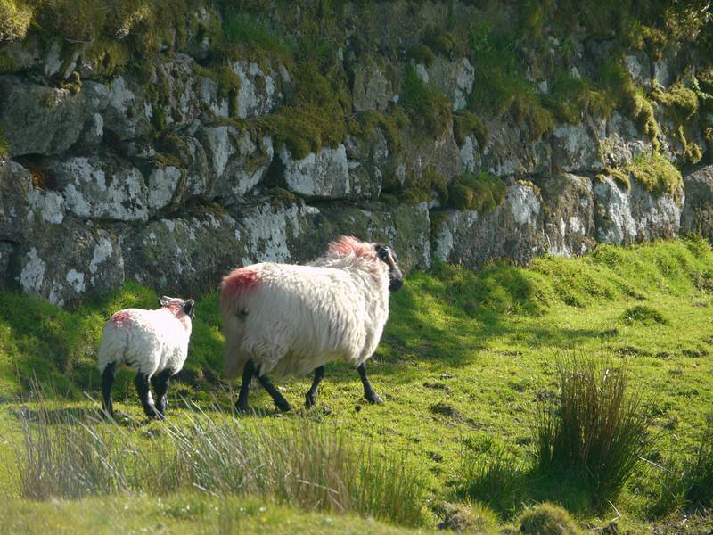 © RobAng 2011, Velotour GB (Dorset-Devon-Cornwall), Devon, Two Bridges, Dartmoor Forest, 411 m