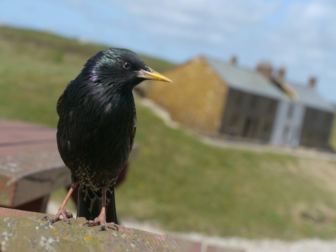 © RobAng 2011, Velotour GB (Dorset-Devon-Cornwall), Cornwall, Sennen, Sennen, 66 m