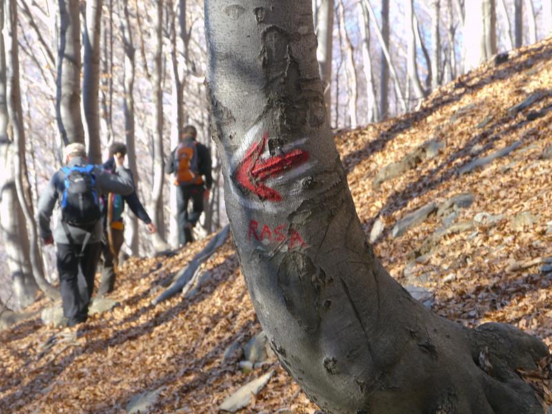 @RobAng 2012,  Alpe di Naccio, Brissago, Cantone Ticino, CHE, Schweiz, 1412 m ü/M, 15.11.2012 15:16:56