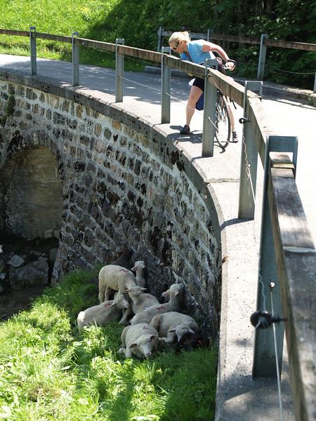 ©RobAng 2009/05/23 13:17:51, Wäggitalersee, 896.5 m // Velotour  Auffahrt 09 - Türlersee-Aegerisee-Raten-Sihlsee-Sattelegg-Wäggitalersee