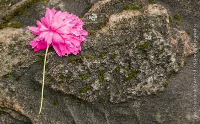 Flower & Rock