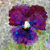 PANSY AFTER KLEE by MICHAEL YARROW.