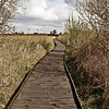 BOARDWALK WIKEN FEN by JOHN BURNETT.
