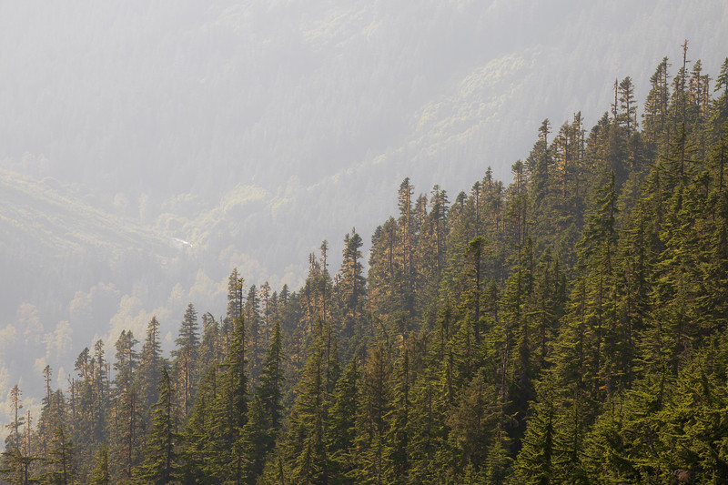 North Cascades, Cascade Pass - Ridgeline with old growth timber against sunbeams