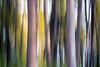 Kittitas, Cle Elum - Two large tree trunks, icm 2