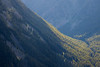 Harts Pass, Windy Pass - Edge of canyon with light illuminating trees