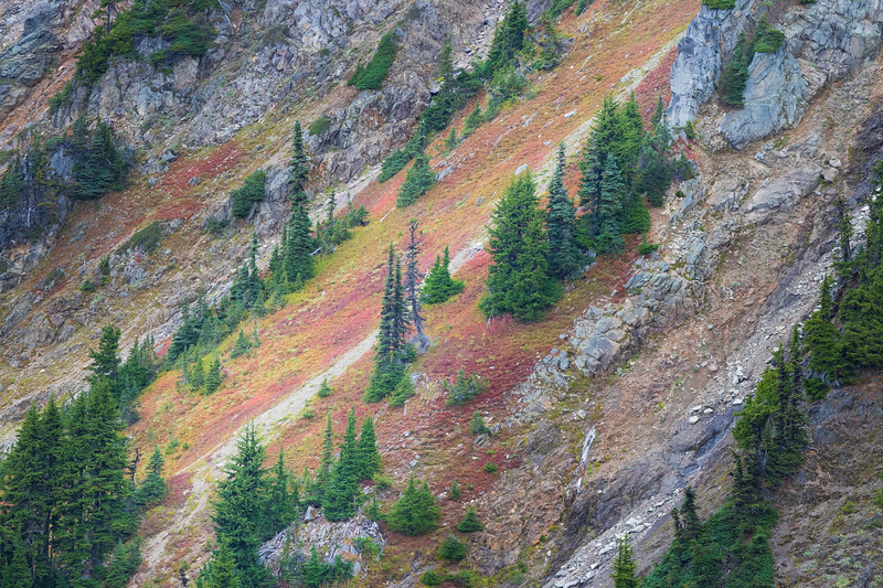 Whatcom, Winchester Mountain - Colorful bushes with trees and rocks on distant hillside