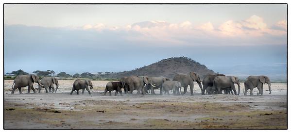 Elephants below Mt. Kilimanjaro, Amboseli National Park, Kenya.