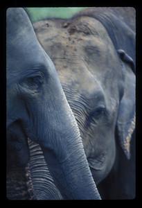 Elephant sanctuary in Sri Lankan highlands.