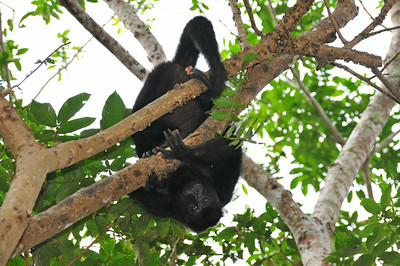 Finally we get to see one of the monkeys up close - usually they stay up high in the trees