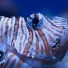 Aquarium-0725
