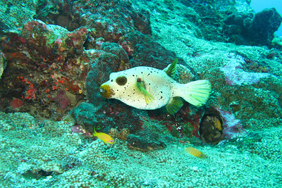 Christmas dive trip in the andaman sea - Similan islands