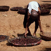 This old woman bent over to move her beetle nuts back into the drying sun like it was nothing. Ethiopia.