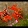 LAST OF THE ACER byPeter Johnson