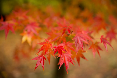Kyoto, Japan 2014