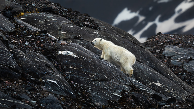 Little Bear Climbs a Mountain