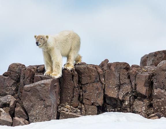 Lookout Bear