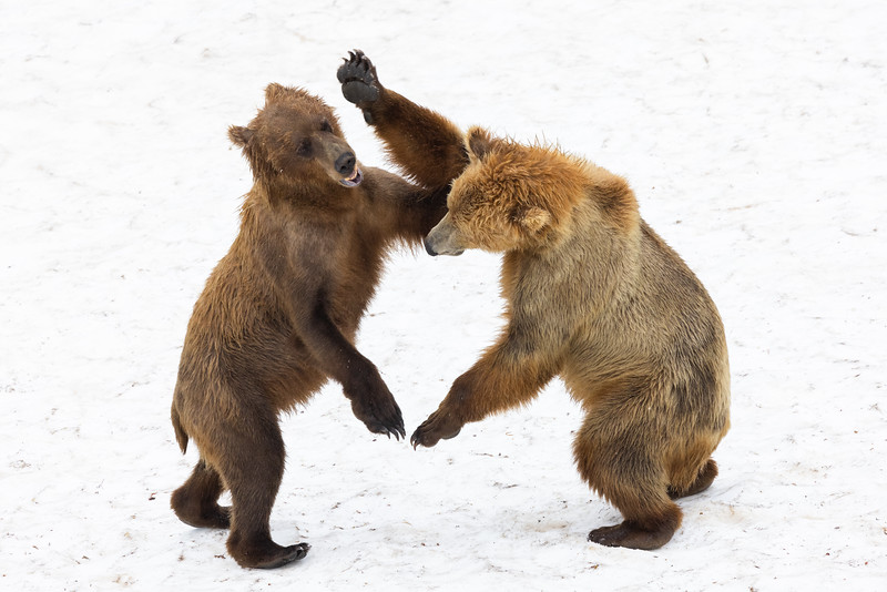 Sparring on Snow